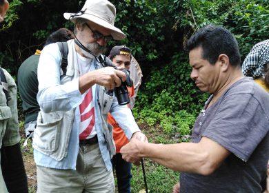 Investigadores descubren dos especies raras de mariposas en reserva natural de Managua