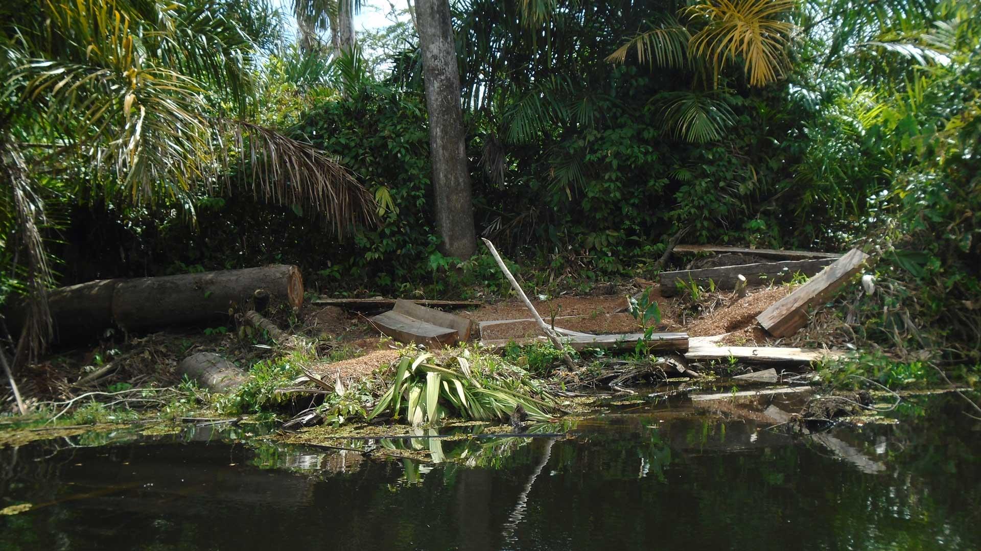 Madera aserrada por desconocidos lista para ser levantada a la orilla del Río Indio, en la zona afectada por el incendio.