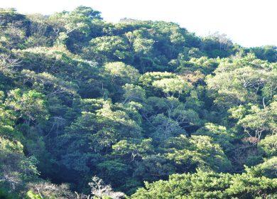 Un árbol, posiblemente nuevo para la ciencia y otro que se creía extinto, los recientes hallazgos de una investigación en el pulmón de Managua