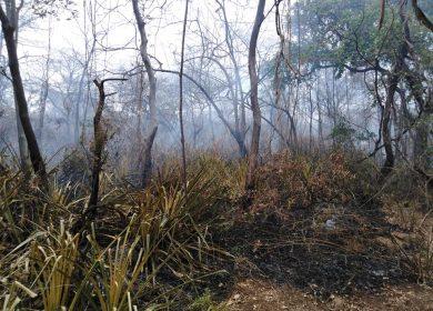 Incendios y zonas boscosas afectadas, se triplican